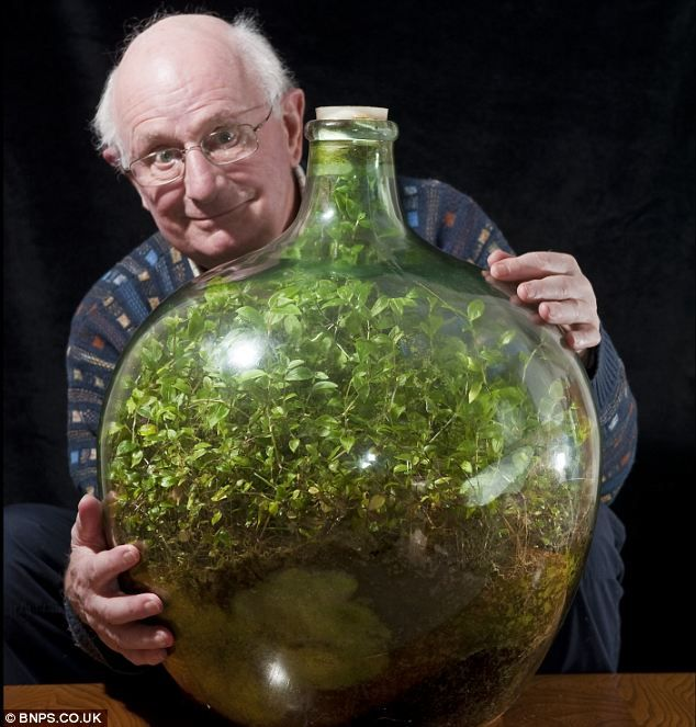 plant-in-a-bottle