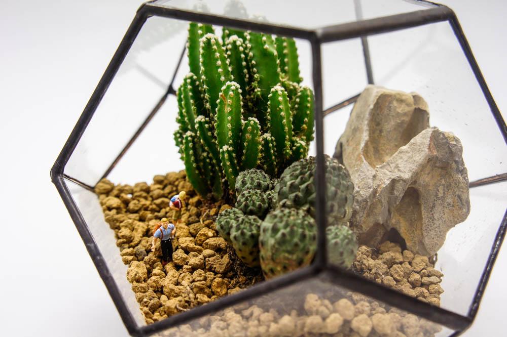 wander terrarium glass farm 100 handmade terrarium. Black Bedroom Furniture Sets. Home Design Ideas