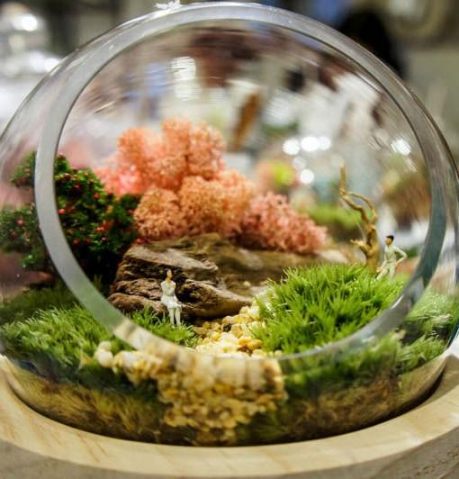 terrarium 玻璃盆栽